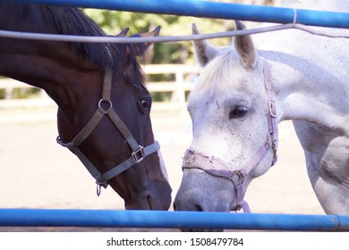 Two horses in the aviary kiss each other.