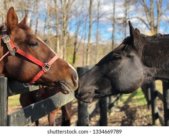 Two horses Bay horse black horse kissing greeting head outdoors farm fence background friends