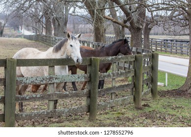 Two horses behind the fence of their paddock with winter trees in the background