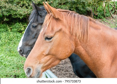 Two horses - brown and black with heads in profiile leaning over a gate in a field