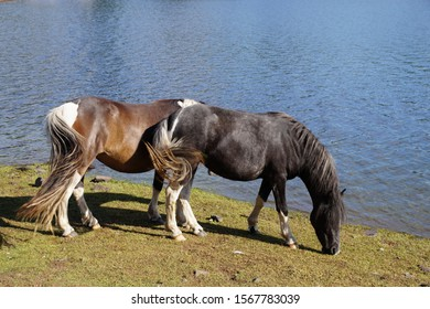 Two horses by a lake