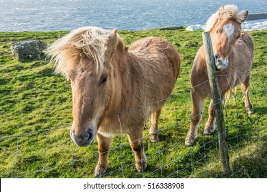 Two horses in the countryside
