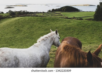 Two horses of different color on green pasture