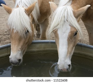 Two Horses Drinking
