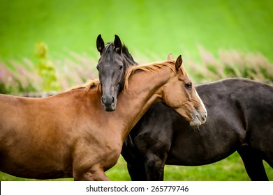 Two horses embracing in friendship.