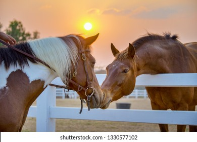 Two horses embracing in friendship. animal portrait on black background. Horses in love. Beautiful thoroughbred red brown chestnut horse in a pen.