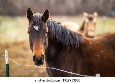 two horses with fence and wire