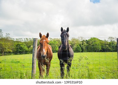 Two horses in a field with green grass. Basque country.