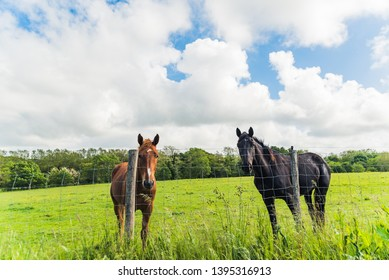 Two horses in a field, one brown and one black. Basque country.