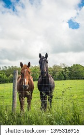 Two horses in a field taken on a vertical frame. Basque country.