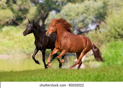 two horses galloping in the meadow