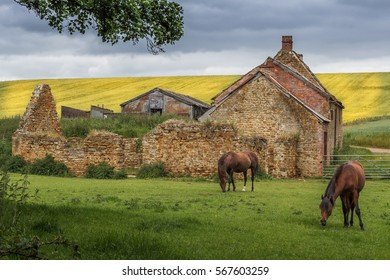 Two horses graze in front of abandoned hay barn