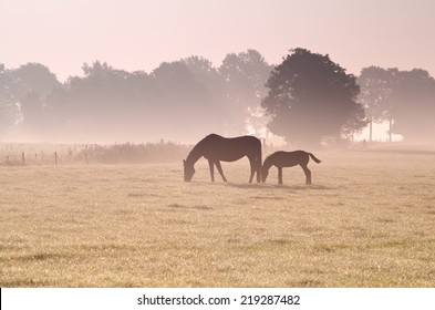 two horses grazing in fog at sunrise