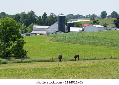 Two horses grazing in a pasture with a farm in the background in Appalachia