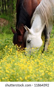 Two horses grazing side by side