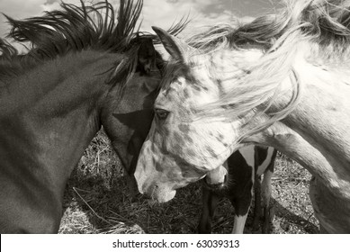 Two horses greeting each other