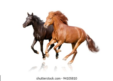 two horses isolated on white