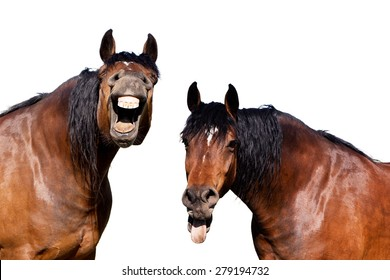 Two horses laughing at funny joke
