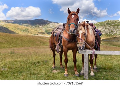Two horses in Mavrovo National Park - Macedonia. Two horses for horse riding in valley near Galichnik village in Mavrovo National Park in Macedonia.