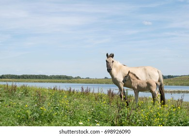 Two horses mother and foal in meadow with river background and blue sky