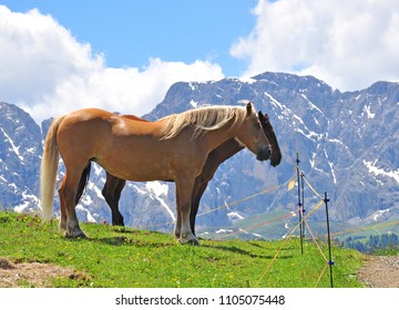 Two horses in mountains, Alps