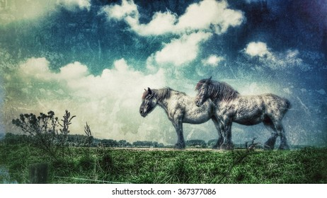 Two horses on a dike