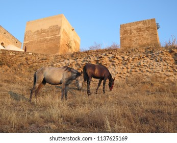Two horses on hillside meadow in Andalusian countryside