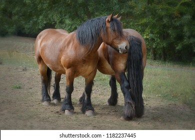 two horses on meadow