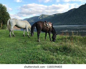 Two horses on the mountain background