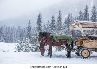 Two horses on a snowy winter day.
