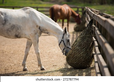 Two horses in the paddock and bent over eating dry grass