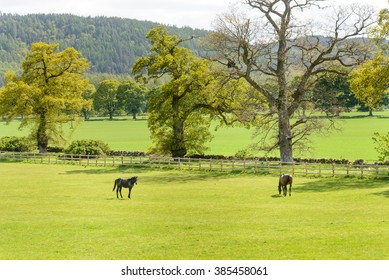 Two horses in a paddock during summer in Scotland.