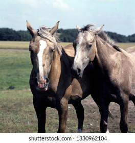 Two horses posing