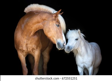 Two horses posing on black background.