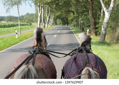 Two horses pull a carriage in the summer over a country road.