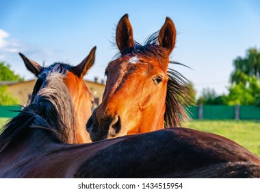 Two horses of red color are embracing, nodding their heads one on another in a pen for the horse.