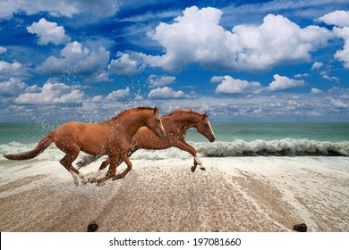 Two horses running along seashore,  blue sea and sky, waves, white clouds, picture for chinese year of horse 2014