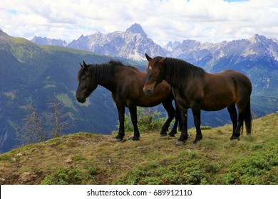 two horses and Sexten Dolomites