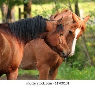 Two horses sniffing noses