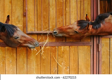 Two horses in the stable
