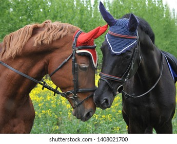 Two horses stand head to head touching noses each other with their noses in a sign of friendship and affection. Kiss of two  horses of black and brown color.