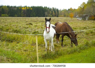 Two horses standing at the field in autumn
