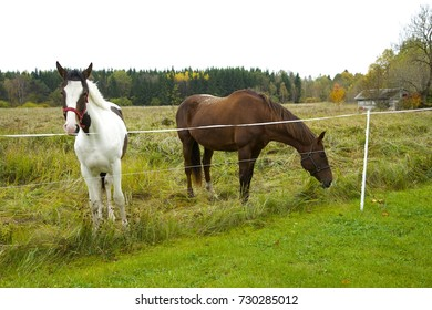 Two horses standing at the field in autumn. Isolated. Daylight