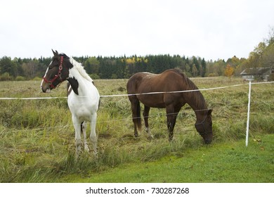 Two horses standing at the field in autumn. Brown horse. Wild horses. Daylight