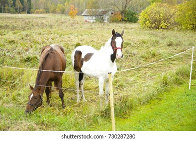 Two horses standing at the field in autumn.