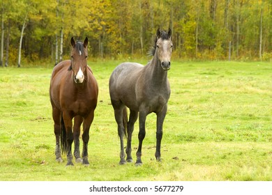 Two horses standing in a field during the fall.