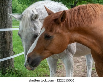 Two horses are standing in the steel.