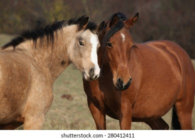 Two horses standing together on pasturage and looking at you