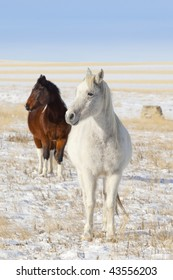 Two horses staring off at the sun in a snowy field.