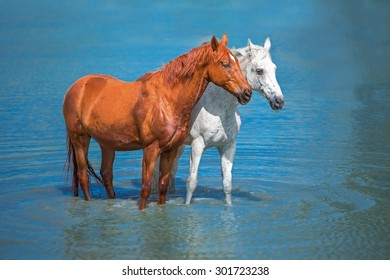 two horses are staying in the blue water